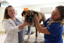 Rocco, a boxer, with Dr. Sheila Carrera-Justiz and Lana Fagman.